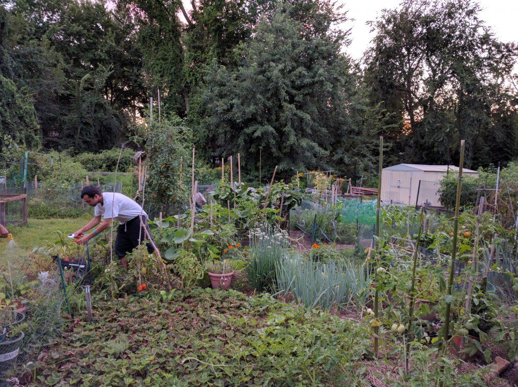 Ivan in garden 160819