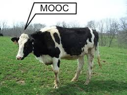 MOOC cow