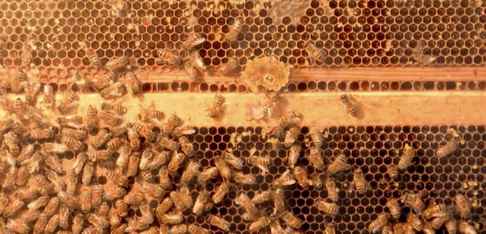 PA Farm Show live bee cam