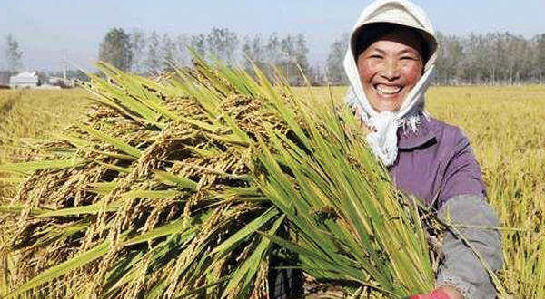 woman carries sheaf of wheat